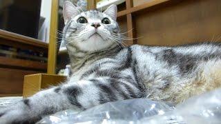 トイレを促してくれるのを待っていた猫 thumbnail