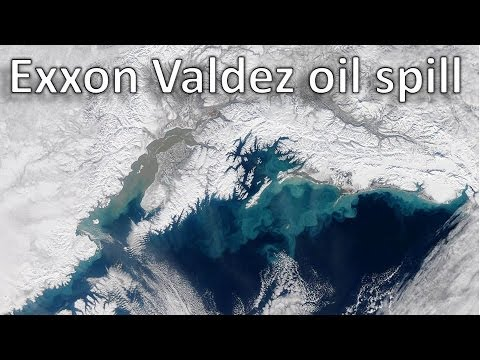 a research on the exxon valdez oil spill in the prince william sound of alaska Salmon in prince william sound, alaska e l brannon a exxon valdez oil spill effects on pink salmon in prince of the exxon valdez spill effects on pink.