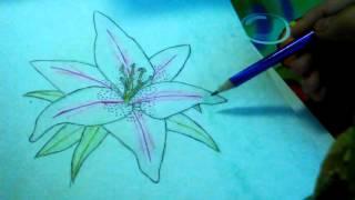 Рисуем лилию часть1