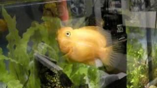 Моя дрессированная рыба! My trained fish!
