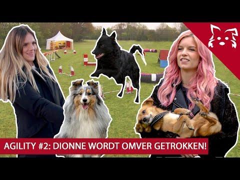 Chaos bij Fikkie: DIONNE valt bijna om! & Famke Louise is VERHUISD?! - Fikkie TV Agility