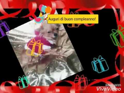Auguri Di Buon Compleanno Con Cani Youtube