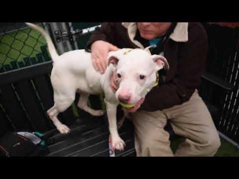 New York Dog Rescue Adoptions Rescue Me