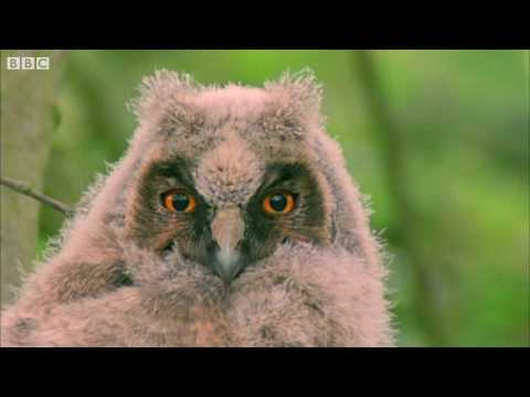 Funny Talking Animals Walk on the Wild Side HD  Children in Need Special 2009  BBC