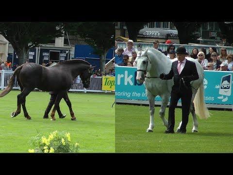 Dublin Horse Show RID Stallion Parade RDS 2017