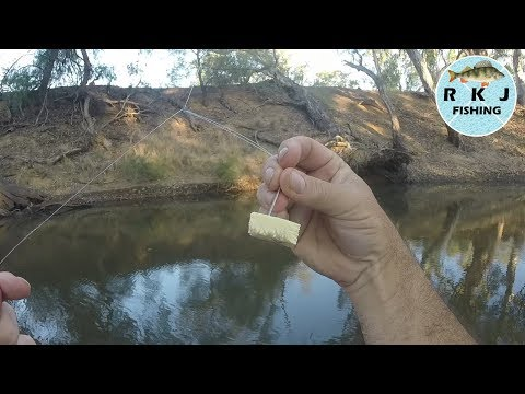 Murray Cod Fishing Using Cheese For Bait