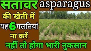 Nepali  Shatavari ki kheti में ना करें यह 6 गलतियां नहीं तो होगा भारी नुकसान asparagus hindi सतावर