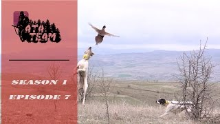 ATA ARMS - ATA TEAM Sülün Avı / Pheasant Hunting Episode 7