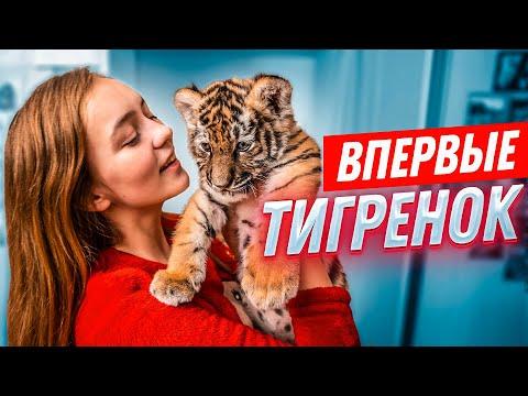 ВПЕРВЫЕ: ТИГРЁНОК У МЕНЯ ДОМА//24 часа вместе