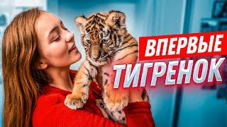 Download ВПЕРВЫЕ: ТИГРЁНОК У МЕНЯ ДОМА//24 часа вместе Mp3 and Videos