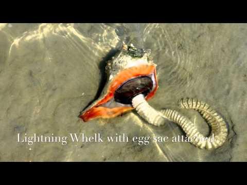 Intertidal Adventure