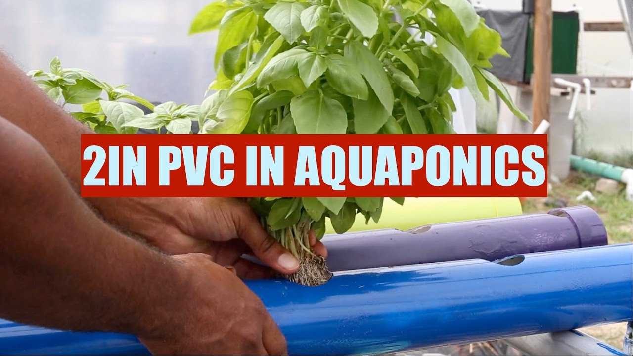 Growing With 2in PVC Pipe | Ask The Aquaponics God Ep2