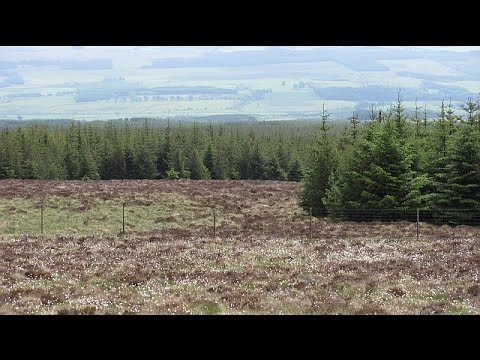 Forestry and Landscape Change in 20th Century Scotland