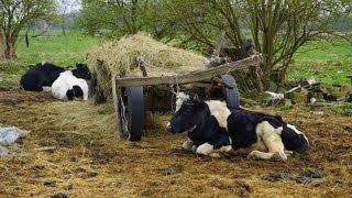Tragedia w Tarnowskim Młynie w gospodarstwie zdychają zwierzęta