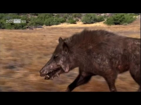 Doku Prähistorische Jäger - Das Killerschwein HD