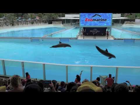 Foche e Delfini, allo Zoomarine, uno spettacolo che sorprende