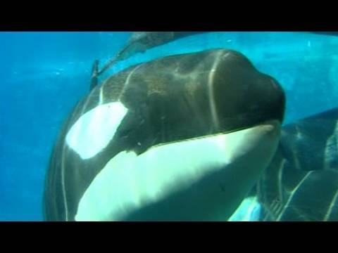 Sea World Cited In Trainer's Death
