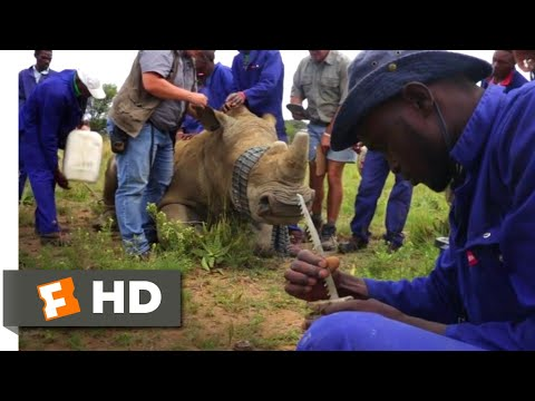 trophy-(2017)---millions-of-dollars-in-rhino-horns-scene-(3/10)-|-movieclips
