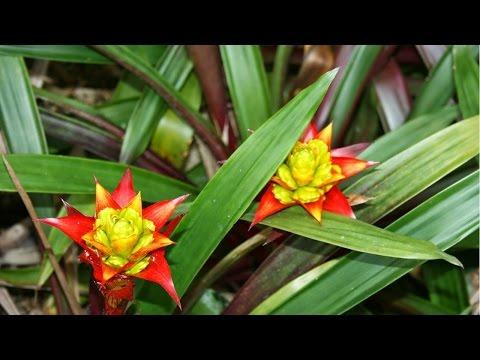 Curso Cultivo de Bromélias - Clima e Substrato