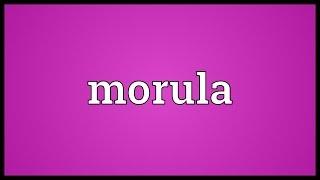 Morula Meaning