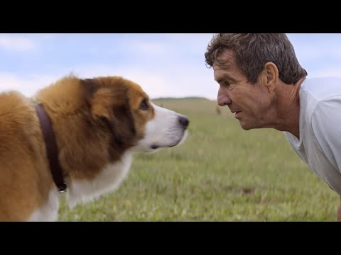 Dennis Quaid says controversial A Dog s Purpose video was a scam from YouTube · Duration:  2 minutes 36 seconds
