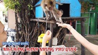 Du lịch Phú Quốc|Gặp 2 mẹ con khỉ dễ thương trong nhà hàng Hạnh Nhung Phú Quốc