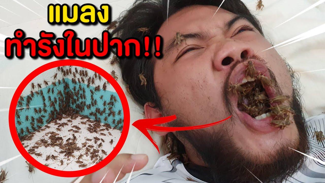ระวังอันตราย ขุดเอาแมลงมาเลี้ยง แมลงทำรังในปาก!!