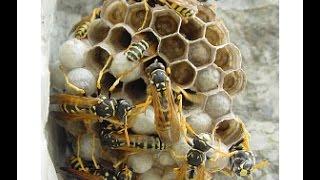 как избавиться от ос ( пчелы ) в гараже ( killing bees)