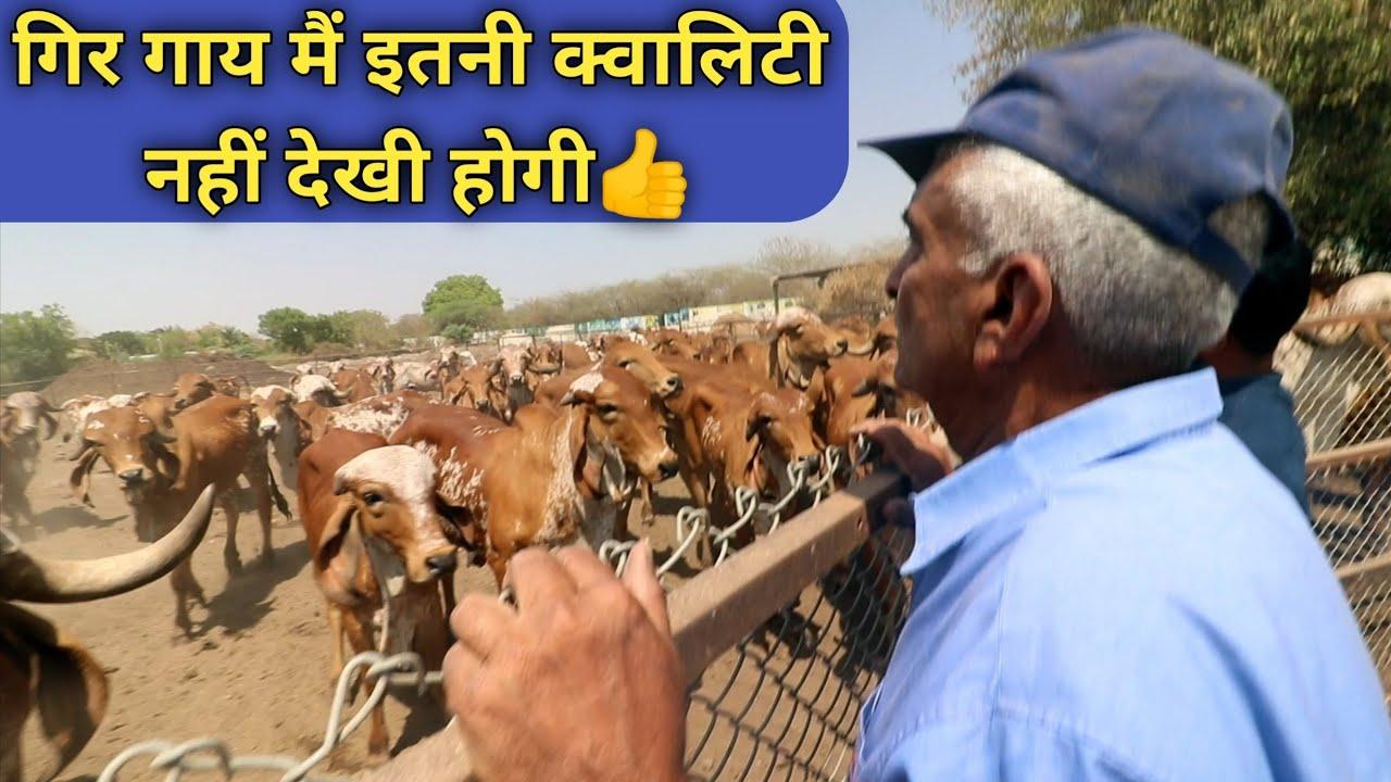 ऐसा पशुधन नहीं देखा होगा|Pardeep Singh Raol Gir Gaushala Bhavnagar Gujrat