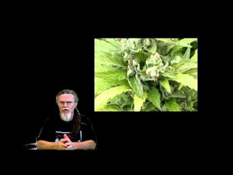 How To Grow Maijuana. Full Season Light Depot