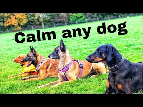 calm-any-dog!