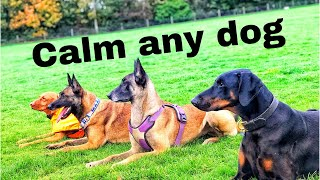 Calm Any Dog!