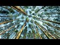 Mavka. The Forest Song: The Expedition to Polissya with WWF