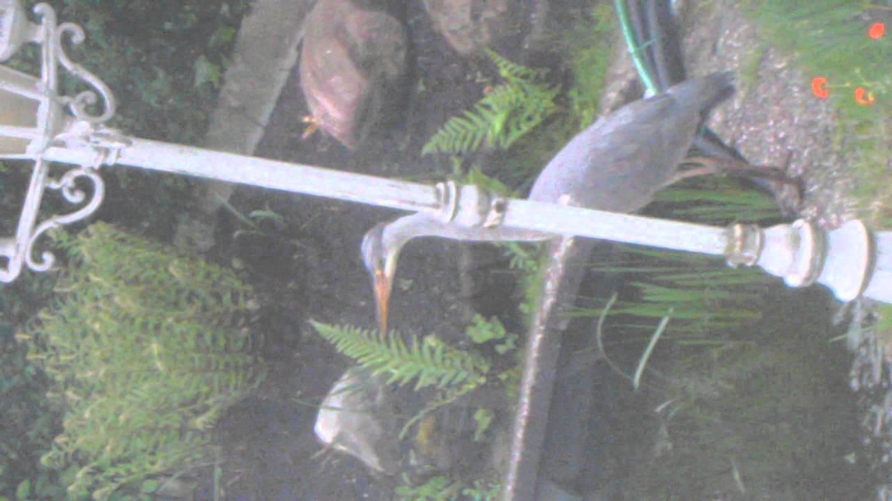 fischreiherabwehr