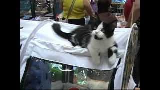 Выставка кошек ростов