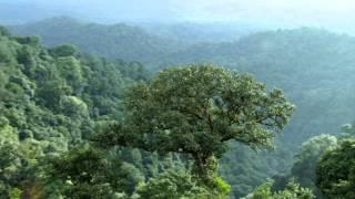 Alam Berbicara | Pandji Pragiwaksono sebagai Hutan Tropis