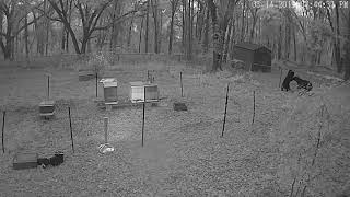 Bears honey bees electric fence
