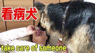 ジャーマンシェパード犬マック君、かーちゃんがリウマチ熱で 関節も痛い...