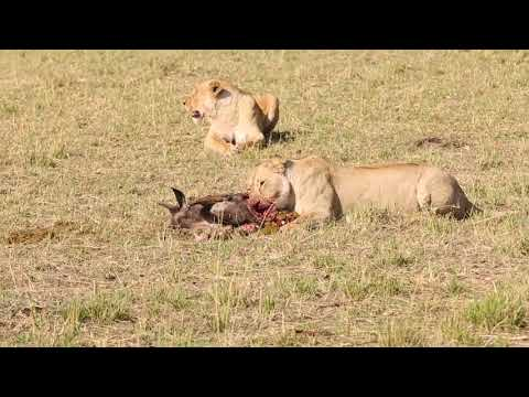 Bountiful Safaris MASAI MARA and TSAVO