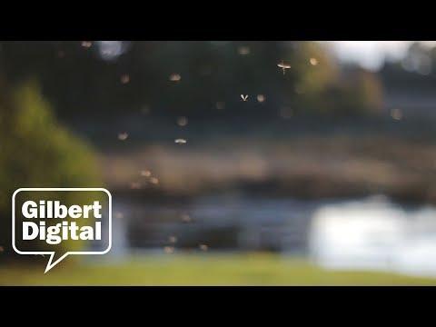 Gilbert, AZ Mosquito Prevention Tips