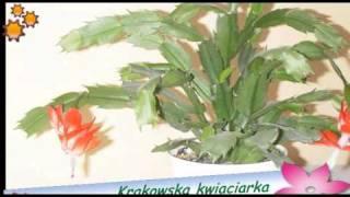 Krakowska kwiaciarka