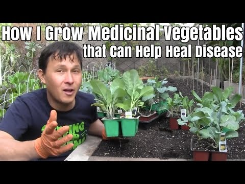 How I Grow Medicinal Vegetables that Can Help Heal Disease