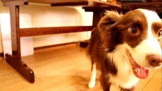 5月25日にティラの病気が発覚して、3週間後には11.8キロだった体重が8.5...