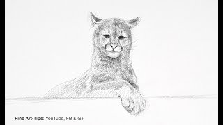 How to Draw a Puma (Mountain Lion or Cougar) - Narrated