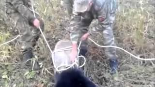 Медвежонок застрял головой в бидоне в лесах Приморья 15 октября 2013