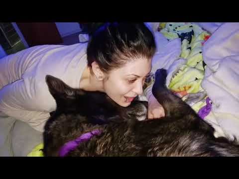 Wolfdog Gets Millions of Kisses