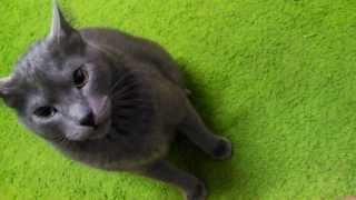 Wladimir surto da meia-noite Midnight crazy cat !