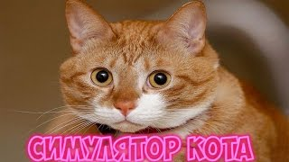 Обзор игры I Симулятор кота