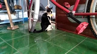Kucing Kawin 2