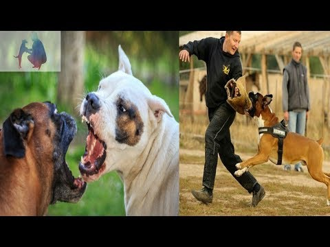 Boxer dog facts in hindi
